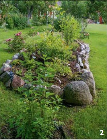 2. Den upphöjda rabatten med magnolia, några buskar och låga perenner