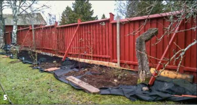 5.Rabatten under arbetet. Rosor och andra buskar planterade, marken täckt av två lager markduk.