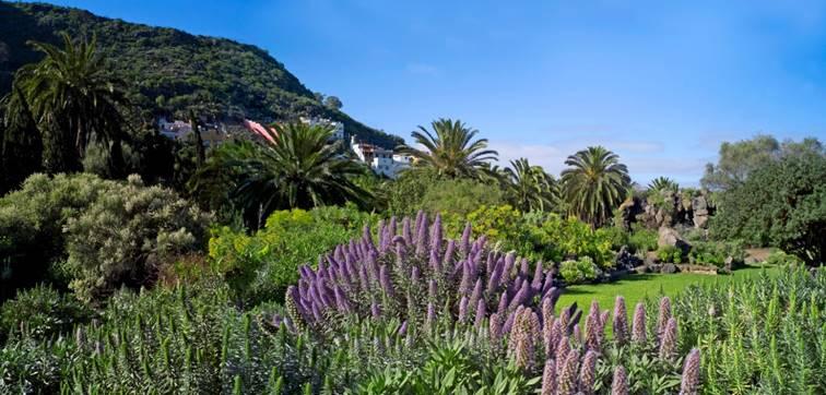 Botanisk vandringsresa till Gran Canaria